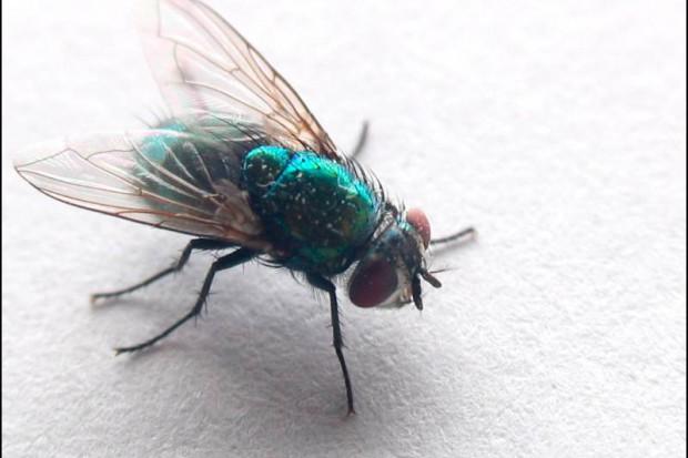 Kędzierzyn-Koźle: pionierska metoda larwoterapii