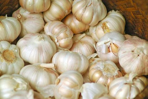 Pyralgina nie dla karmiącej, czosnek i owszem