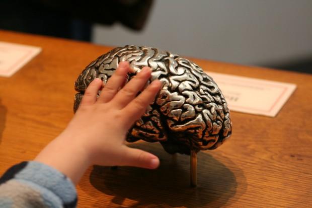 Kraków: mózg przez tydzień w roli głównej