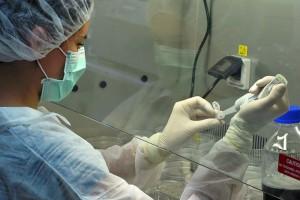 Olsztyn: powstanie laboratorium komórek macierzystych