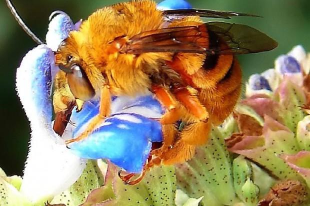 Szczecin: po immunoterapii osy i pszczoły niestraszne