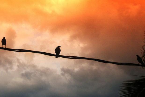 Ptaki pomagająnaukowcom