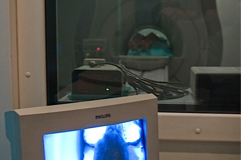 Gliwice: zostanie wdrożony system teleonkologii