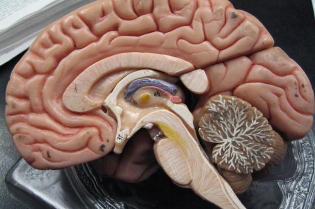 Zielona Góra: nowatorska metoda usunięcia guza mózgu