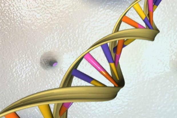 Prof. Pawłowski: identyfikacja ciał genetyczną układanką