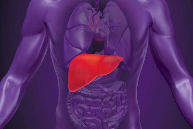Tauryna chroni przed zwłóknieniem wątroby