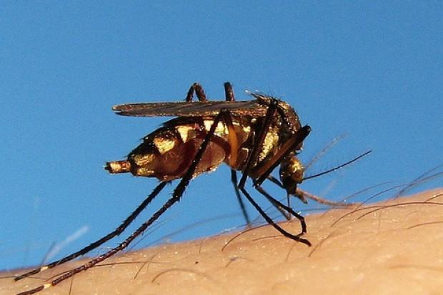 MSWiA da pieniądze na walkę z komarami
