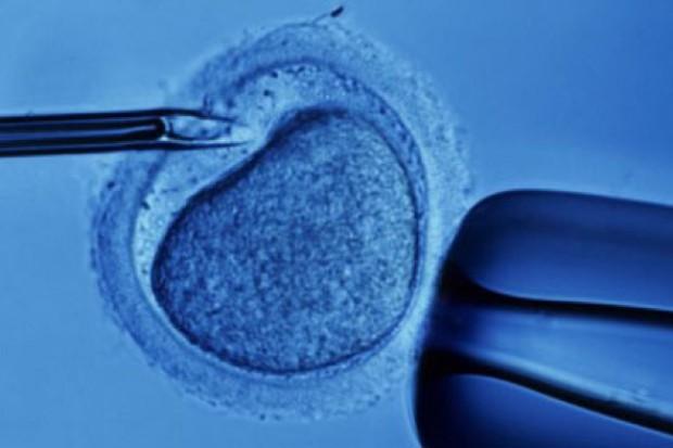 CBOS: spada poparcie zapłodnienia in vitro