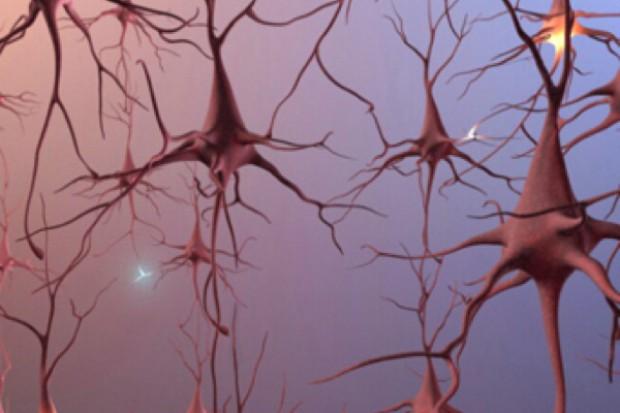 Laboratoryjne badania nad lekiem wspomagającym wzrost neuronów