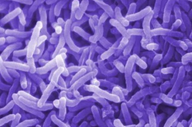 Nigeria: ponad 1,5 tys. osób zmarło na cholerę