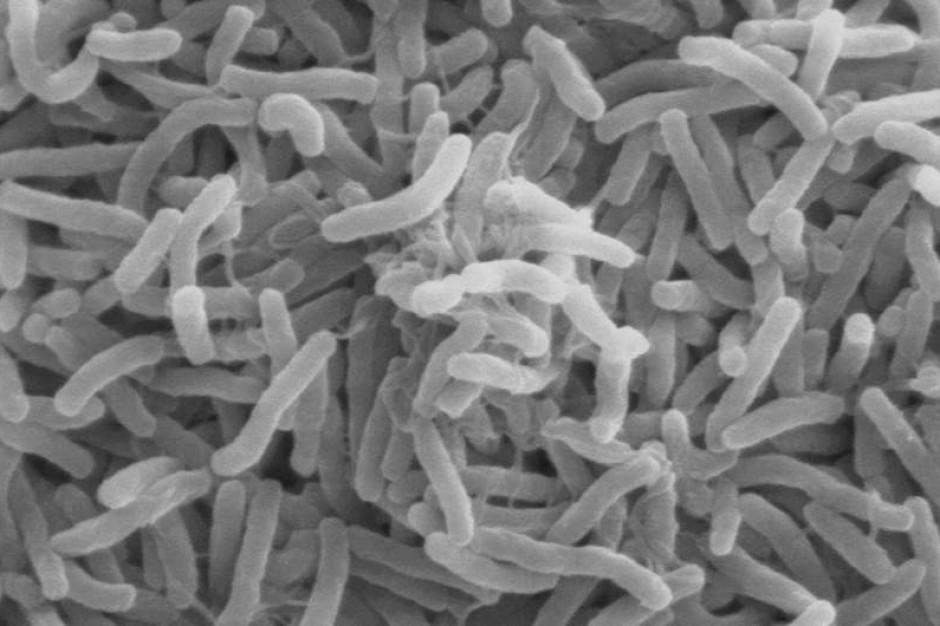 Ameryka Północna: ocieplenie klimatu oznacza epidemie cholery