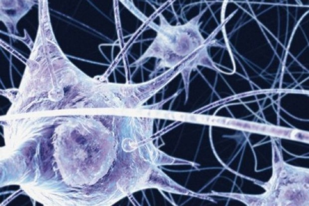 Neurony z laboratorium: sposób na chorobę Alzheimera?