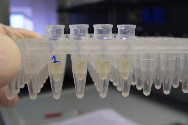 Małe pałeczki, wielki strach: nasi naukowcy jadą do Niemiec