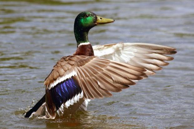 ONZ ostrzega przed wzrostem zagrożenia ptasią grypą