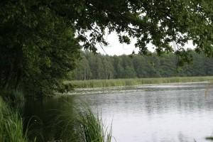 Drzewoterapia, czyli naukowo o spacerach po lesie