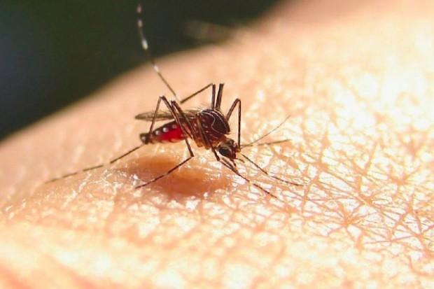 Malaria ciągle ciągle groźna dla podróżnych