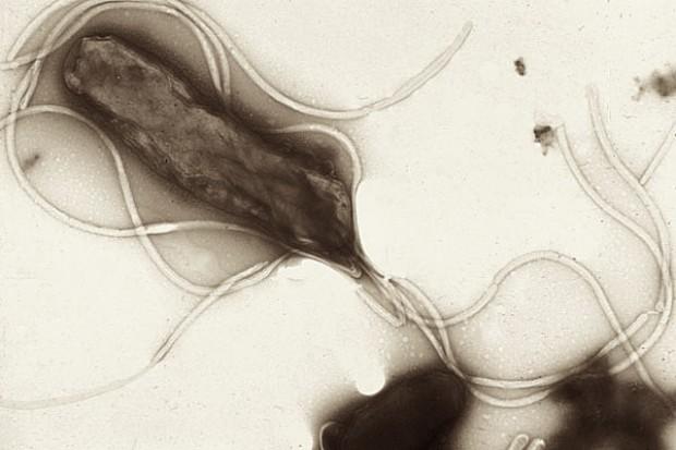 Rifabutin przy nieskutecznej eradykacji zakażenia Helicobacter pylori
