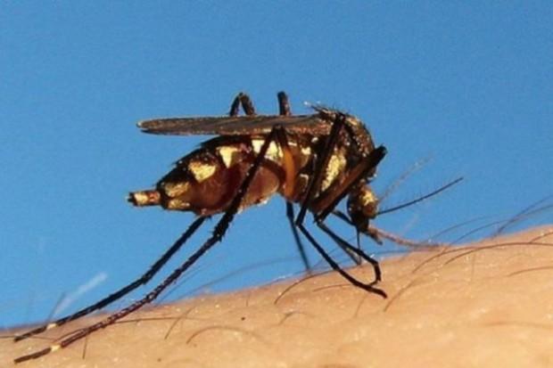 Łódź: do specjalisty, z podejrzeniem malarii - we wrześniu