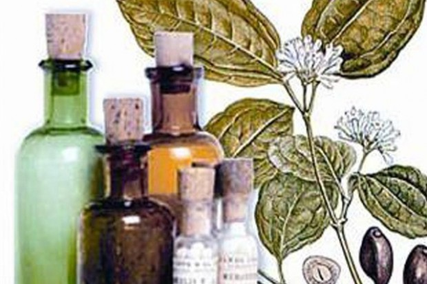 Wielkopolskie: malwa czarna rośliną leczniczą 2012 roku