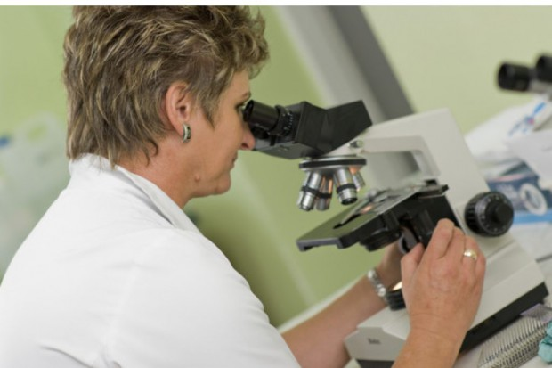Utrecht: naukowcy obserwują rozwój nowotworu w brzuchu myszy