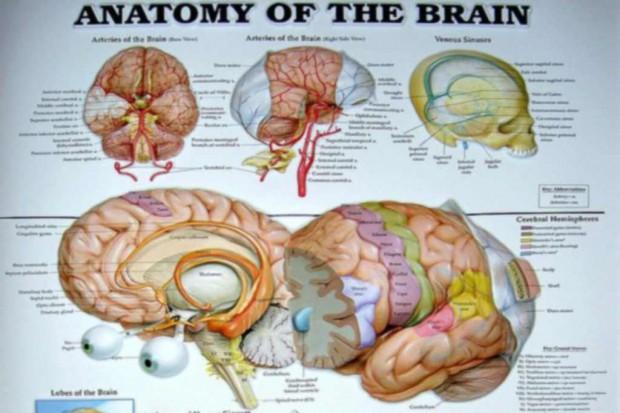 Duża waga urodzeniowa - większy mózg u nastolatka