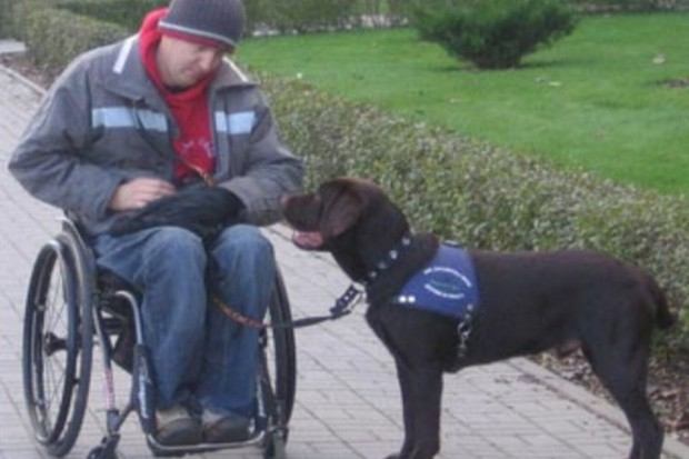 Senat ws. noweli ustawy dot. psów asystujących niepełnosprawnym