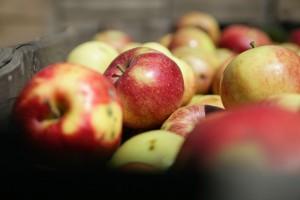 Podkarpacie: w szkołach będzie dostępna tylko zdrowa żywność?