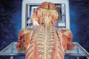 Kraków: wystawa wypreparowanych ludzkich ciał