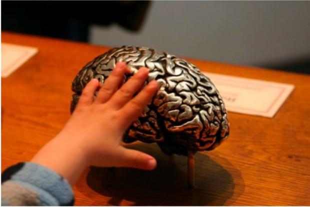 Naukowcy: ten rejon mózgu odpowiada za równowagę