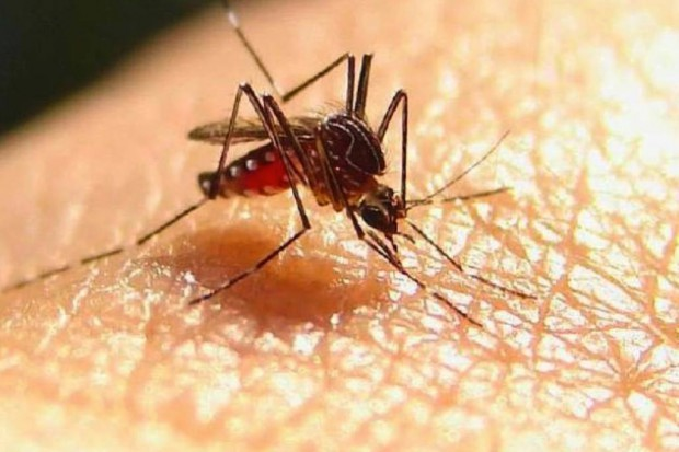 Naturalna ochrona przed komarami
