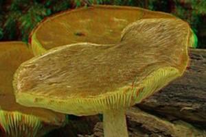 CZD: czterolatka po zatruciu grzybami nadal w b. ciężkim stanie