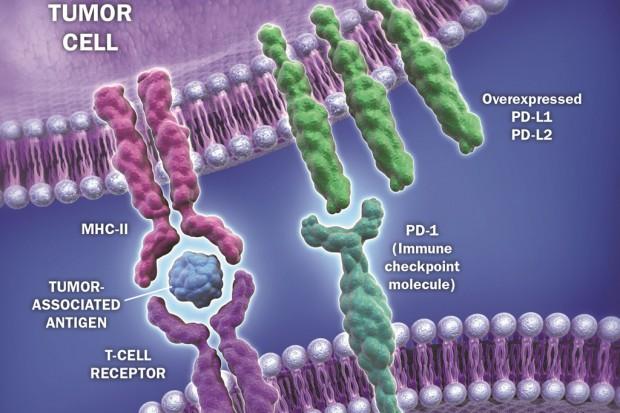 Badania dot. terapii zaawansowanego czerniaka i niedrobnokomórkowego raka płuca