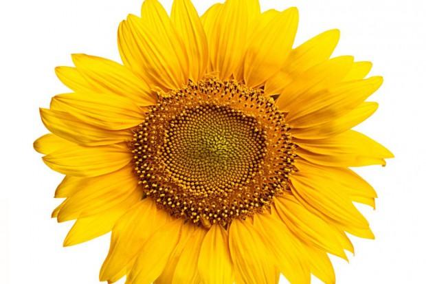 Kwiaty chronią serce