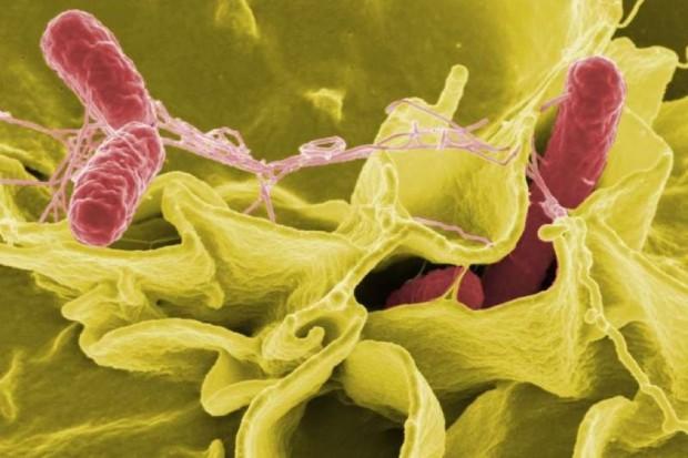 Radom: latem najwięcej zakażeń salmonellą