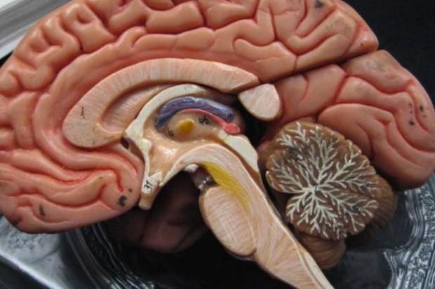 Badała neurony, miała udar mózgu - jej książka jest bestsellerem