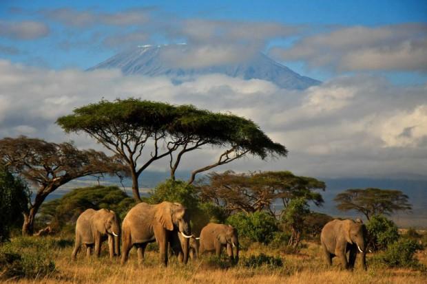 Turyści nie odwołują wyjazdów do Afryki