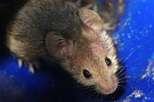 O badaniach na zwierzętach, ku pamięci królików doświadczalnych