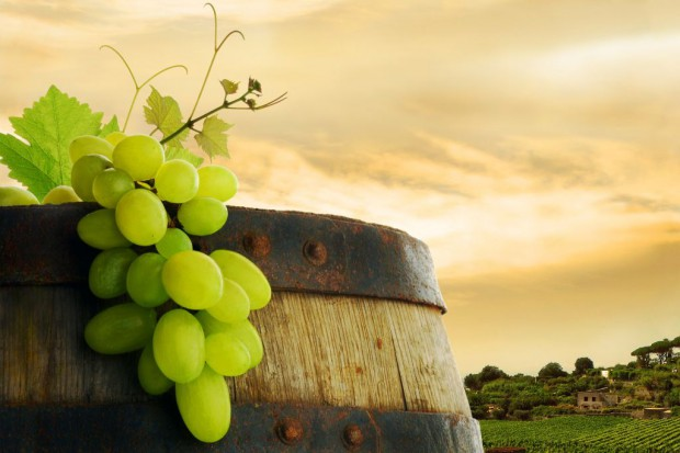 Składnik winogron powstrzymuje rakotwórcze białko