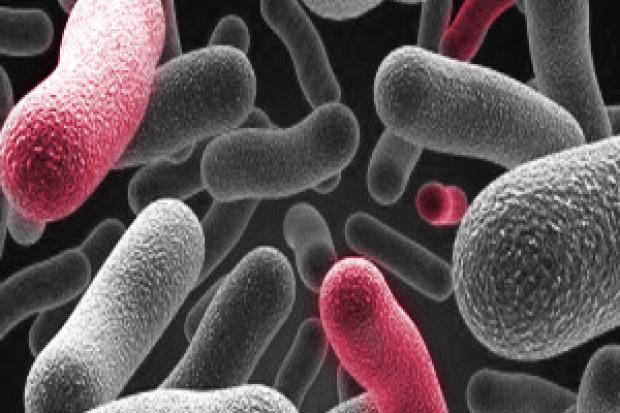 Wrocław: potwierdzono skuteczność miedzi w zwalczaniu drobnoustrojów