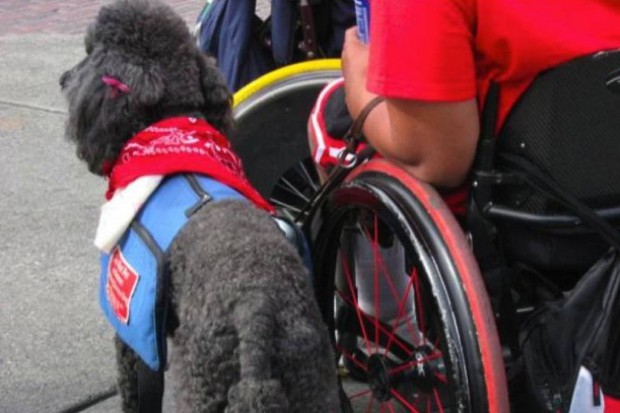 Kraków: zadośćuczynienie dla pacjentki z psem przewodnikiem