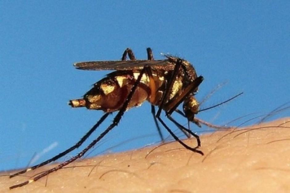 Jedzenie owadów ma pozytywny wpływ na mikrobiom jelitowy