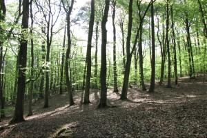 """Małopolska: """"Lasy dla życia"""" - program dla niepełnosprawnych"""