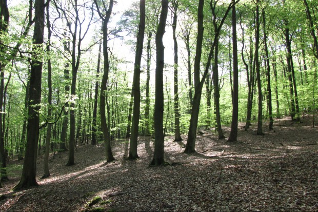 Były dyrektor szpitala chce budować muzeum… leśnictwa i łowiectwa