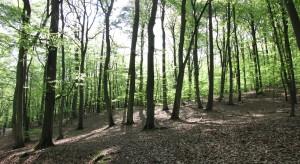 Zielone tereny w pobliżu miejsca zamieszkania kluczowe dla zdrowia płuc