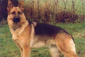 USA: pierwszy pies śmiertelną ofiarą Covid-19