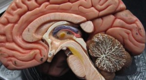 Naukowcy: mózg nastolatka podlega intensywnym przemianom
