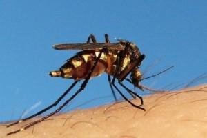 WHO: Algieria i Argentyna kolejnymi krajami wolnymi od malarii