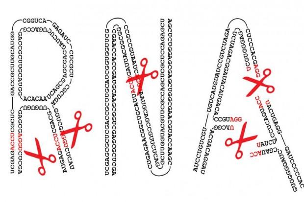 """Badania: polscy naukowcy odkryli """"nożyczki"""" do przecinania RNA"""