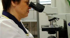 GIS ostrzega: bakterie Listeria monocytogenes w hamburgerach