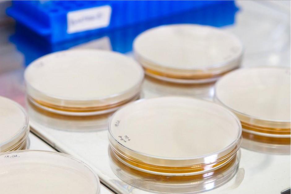 W szpitalu w Gorzowie Wielkopolskim nie ma bakterii New Delhi, ale jest w kraju
